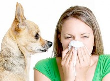 How-to-protect-against-allergies