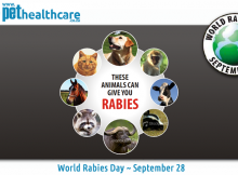 World Rabies Day September 28 Pet Health Care L