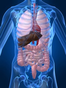 Human-body-with-organs